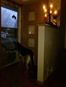 Tasha Trollin' for Trick or Treaters. . .