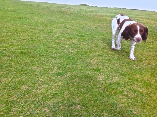 WEB Cooler Stonehenge Doggie 0847