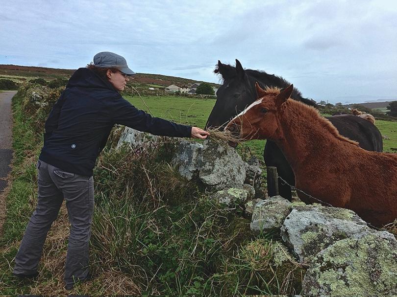 WEB Euro Sari Feeding Horses